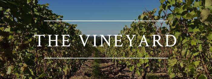 Visite de notre vignoble.jpg